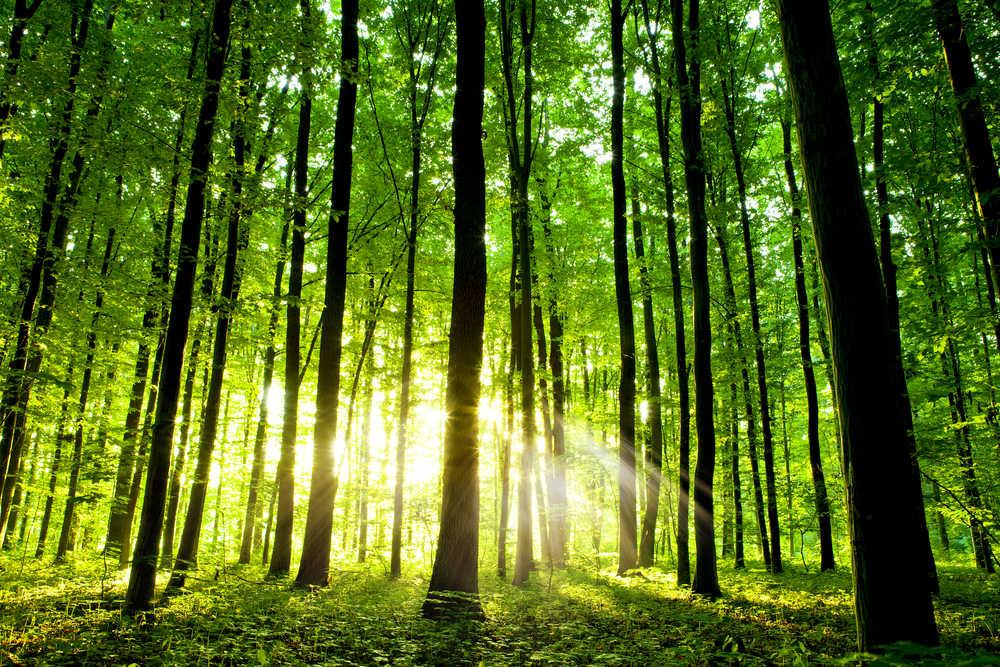 Motore di ricerca che pianta alberi